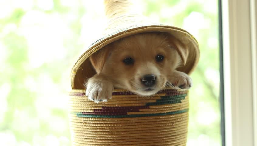 dog in a basket.jpg