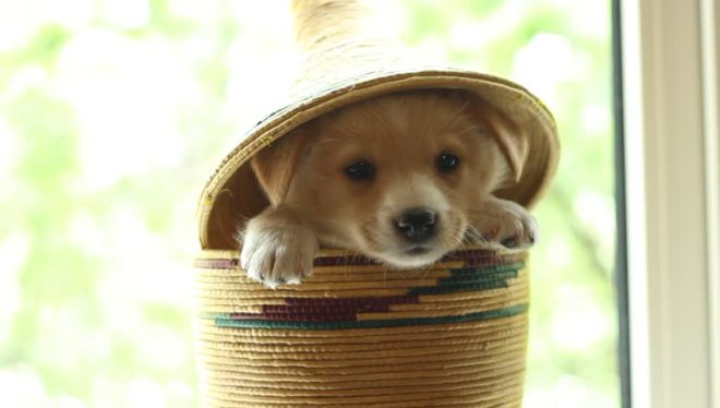 dog in a basket.jpg