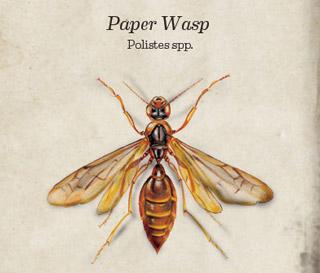 main_main_paper-wasp-bug-book